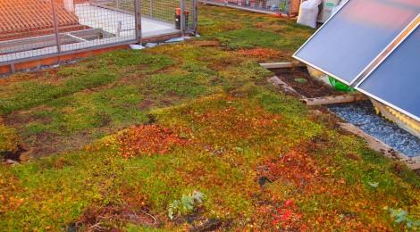 Nueva intervención en cubierta vegetal en Granada