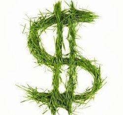 Las cubiertas verdes pueden reducir hasta un 50 % el consumo energético - Energías Renovables, el periodismo de las energías limpias.