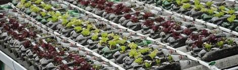 Cultivos para barrios deprimidos